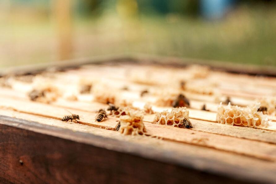 apicultura masia Mas d'en Giralt